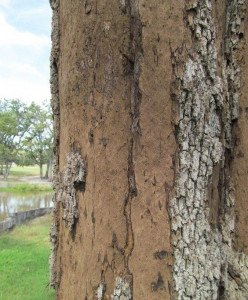 The 5 Most Common Tree Diseases In Austin