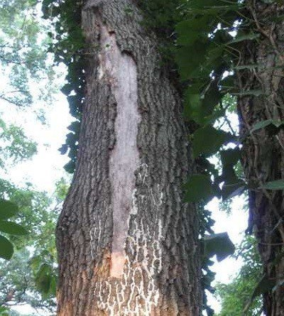 Most Common Tree Diseases In Austin