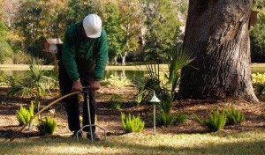 Tree Fertilization in Austin
