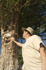 Top Ten Reasons to Hire A Certified Arborist