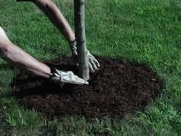 Benefits of Mulching Trees