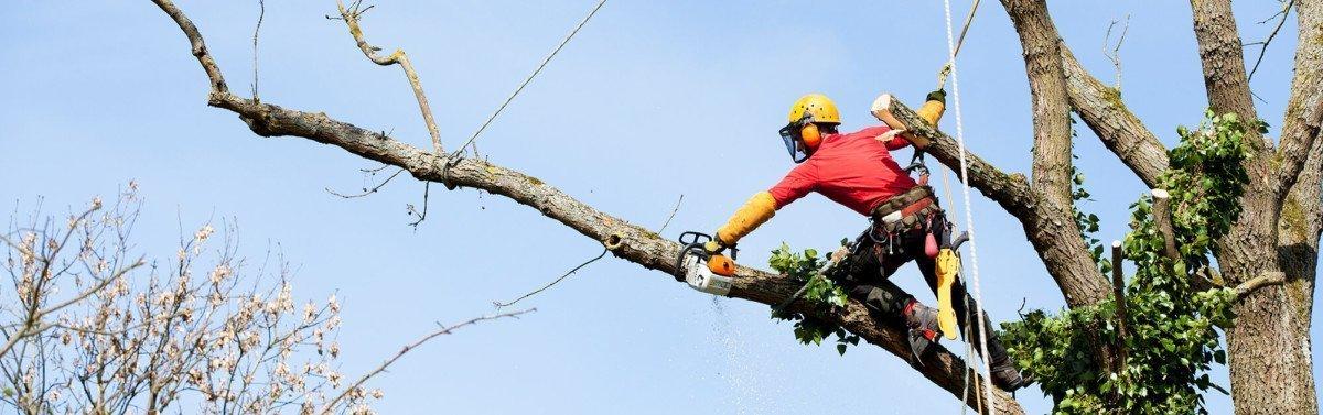 Tree Trimming | Austin, Tx | Austin Tree Surgeons