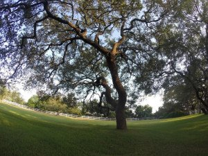 Tree Trimming In Austin