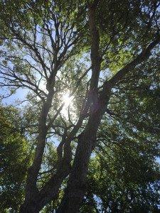 San Marcos tree service