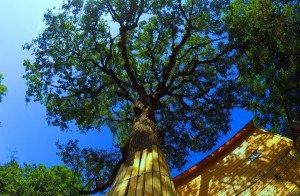 Tree Trimming Georgetown
