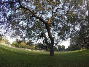Lakeway tree trimming