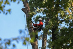 Lakeway tree services being performed